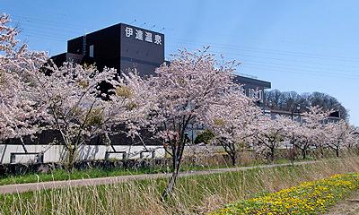 サイクリングロード桜並木