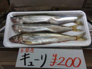 胡瓜魚20180222