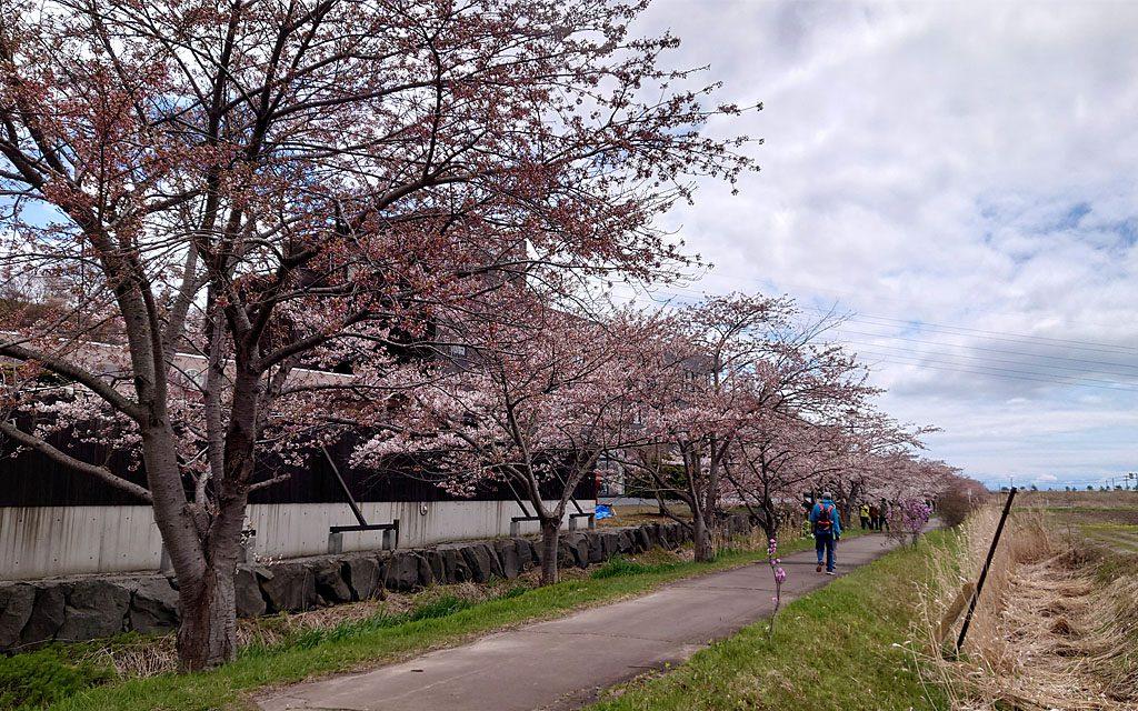 20210502桜02