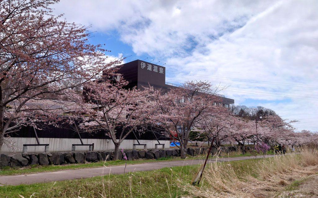 20210502桜01